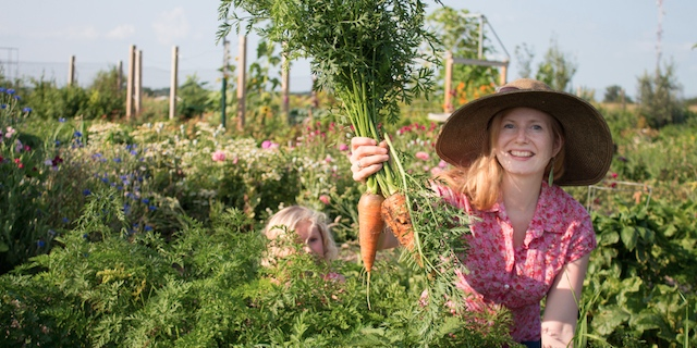 Community members harvest carrots