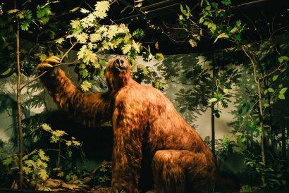 Rusty the sloth -- photo by Britt Fowler