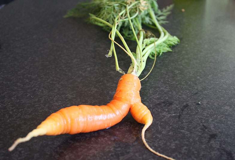 Being different is A-OK, little carrot. -- photo by craigles75