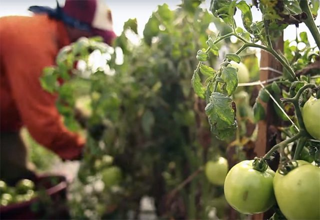Video still from 'Food Chains' documentary
