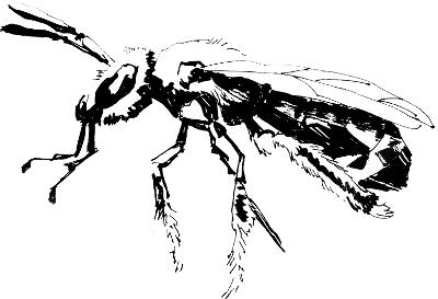 Line Art Bee : Scripts u queen bee productions