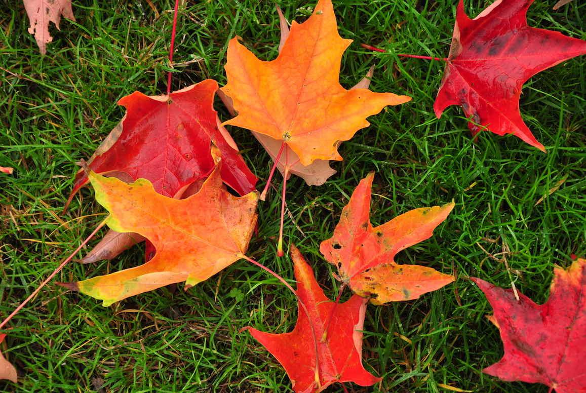 Iowa City Announces Start Of Annual Leaf Removal Program