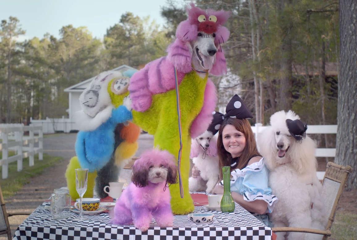 Sunshine And Rainbow Dogs Filmscene Hosts A New Doc Showcasing Creative Dog Grooming Little Village
