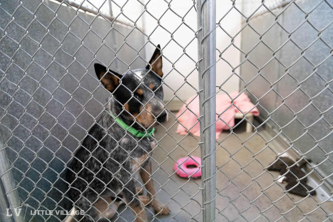 Adopt or shop: The specter of puppy mills looms over local